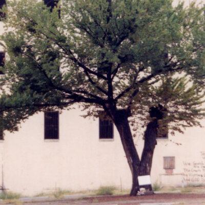 The Survivor Tree – Then